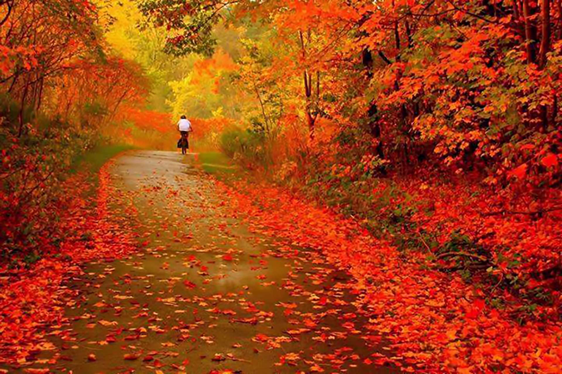 Fall_Background
